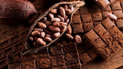 Пирог с шоколадом. Шоколадный пирог – общие принципы и способы приготовления