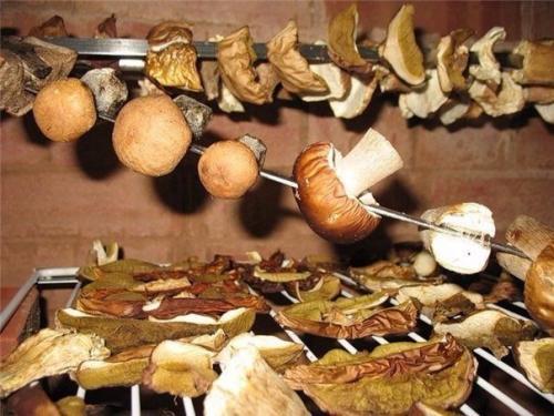 Шедевры заготовок на зиму. Одиннадцать заготовок грибов на зиму!