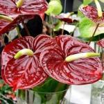 5 натуральных удобрений для домашних цветов?