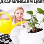Секрет роскошного комнатного цветника прост: растения нужно хорошо подкармливать, иначе не дождаться ни пышной листвы, ни хорошего цветения.