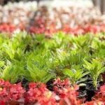 18 советов о выращивании цветочной рассады.